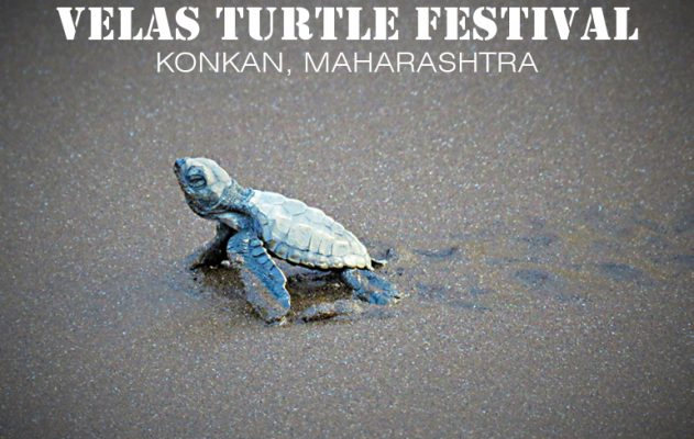 Velas Turtle Festival – Home Stay