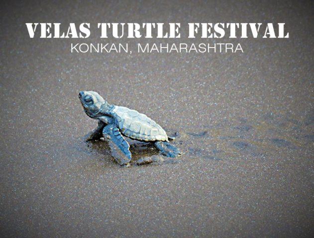 Vela Turtle Festival