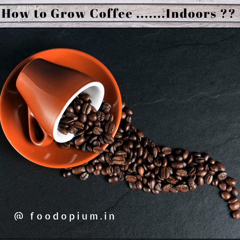 How to Grow Own Coffee Plant Indoors…?
