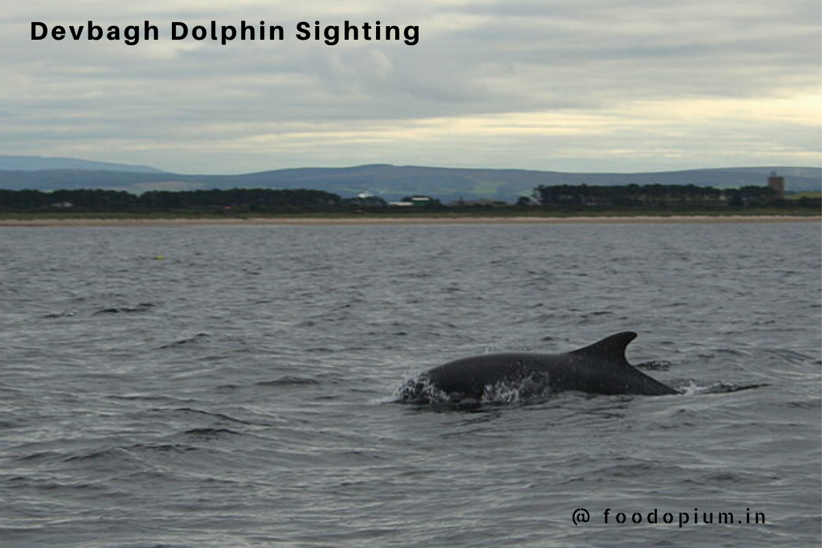 Devbagh – Dolphin Sighting